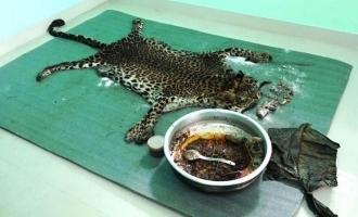 SHOCKING: 5 arrested for killing and eating wild leopard