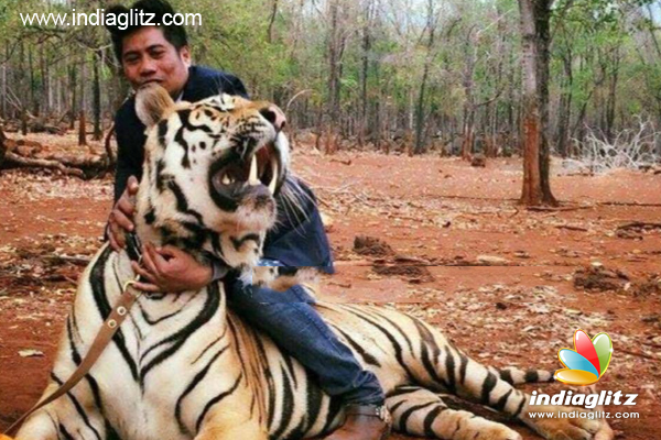 Peter Hein has shared the picture of the Tiger in