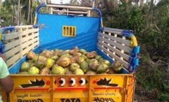 Delta farmers load relief lorries with tender coconuts to