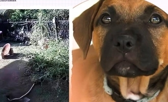 Brave girl saves puppy from python, video turns viral!