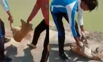 Youngsters who brutally attacked dog for Tik tok video arrested!